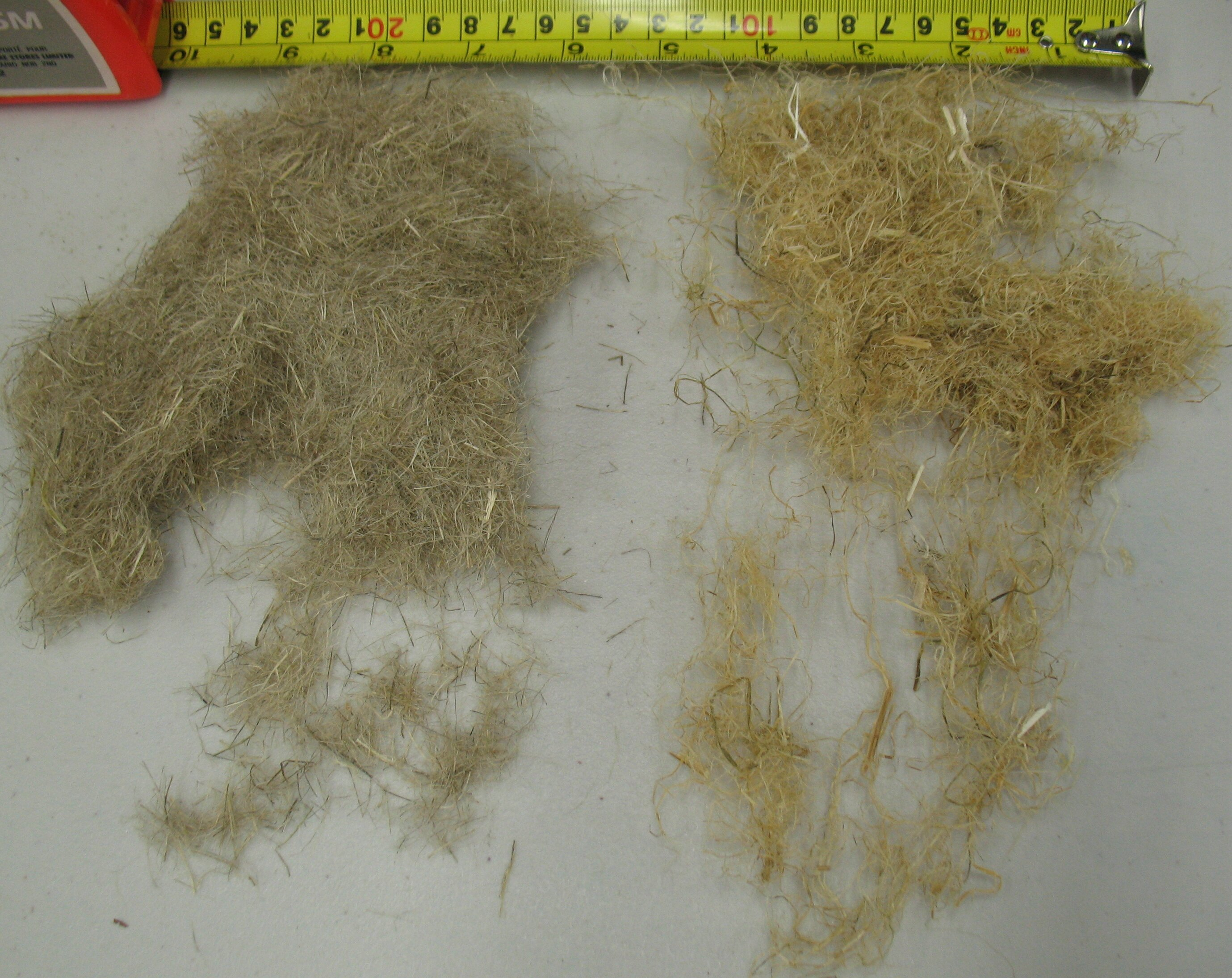 Old dew-retted cut hemp (left) and new water-retted uncot hemp (right)